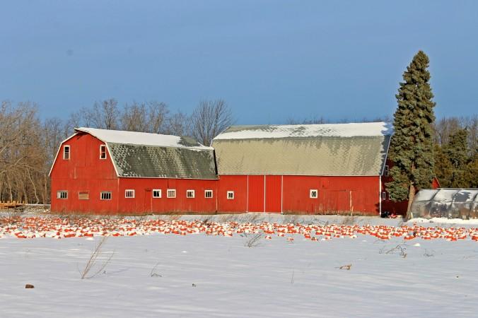 pumpkin barn 4x6.jpg